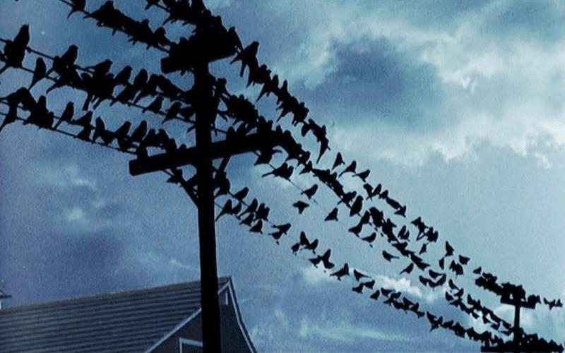 the birds composition